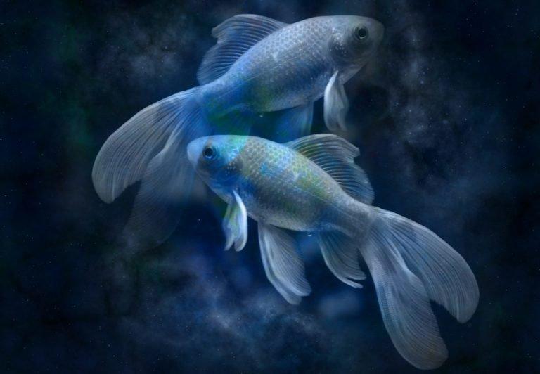Vissen 19 februari – 20 maart